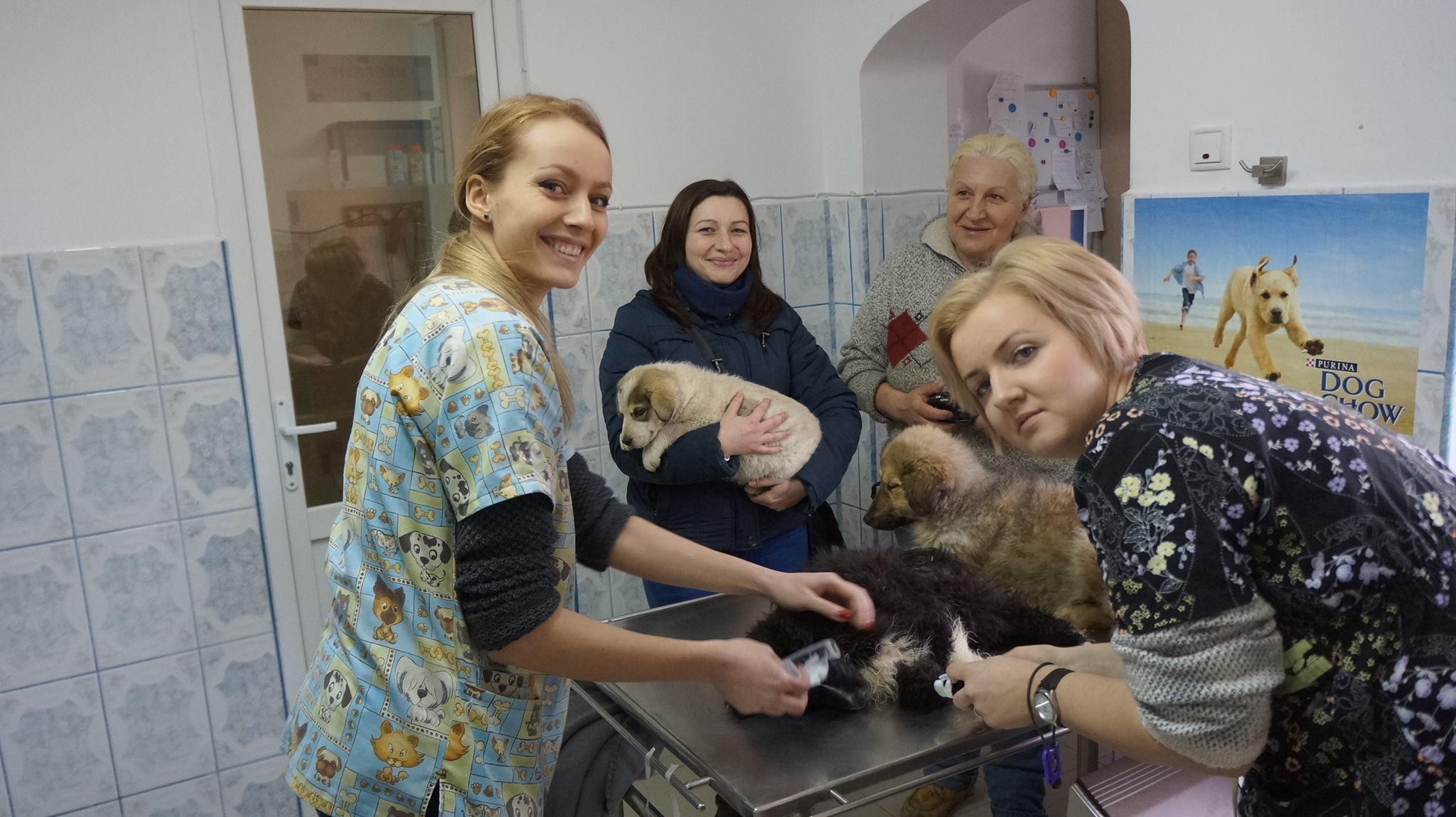 Cabinet Veterinar Suceava