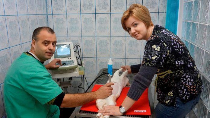 Fanvet Clinica Veterinara Suceava